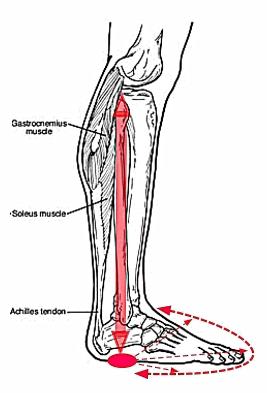 bones foot leg